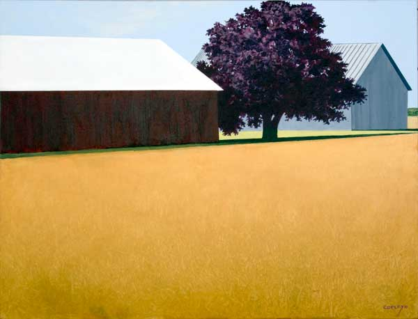 two barns separated by a red maple with a foreground of a golden field of wheat