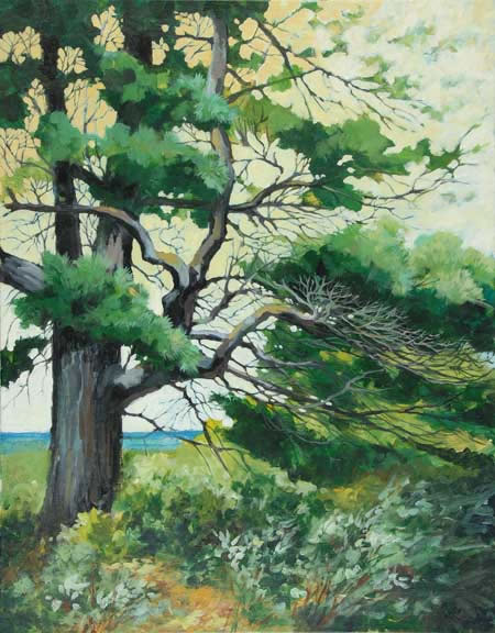 painting of a white pine at Seagull Point