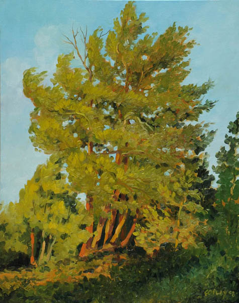 painting of pines trees colored yellow by the sun