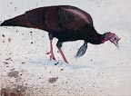 painting of a wild turkey