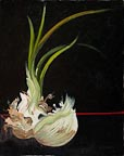 painting of a sprouting onion