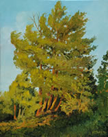 a painting of pine trees lit by evening sun